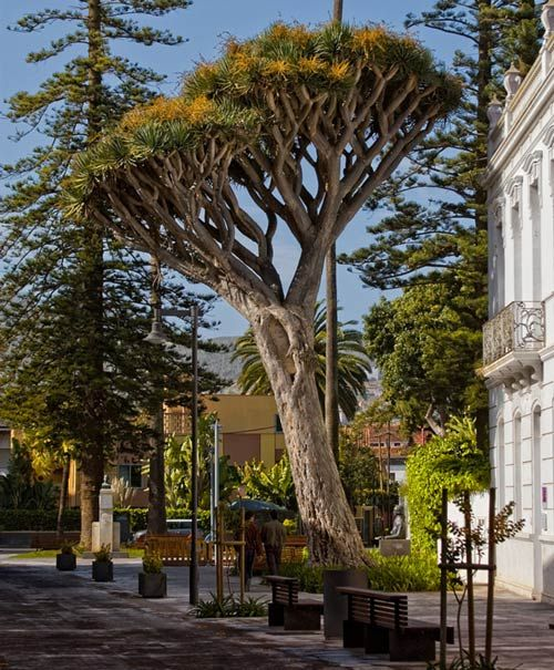 Christmas Tree San Jose: 359 Best Images About ISLAS. CANARIAS. SPAIN On Pinterest