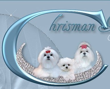 Maltese Puppy Maltese Puppies Maltese dog Maltese puppy for sale