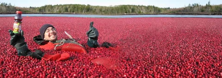 We get dried Nova Scotia cranberries, blueberries, and apples from Terra Beata Cranberry Farms in Lunenburg, NS.