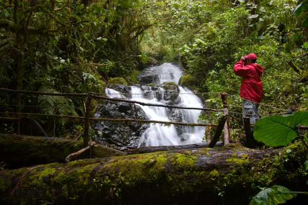 La Amistad International Park, The park is located in Northern Panama and Southern Costa Rica.