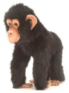 Hansa's life-like Chimp.