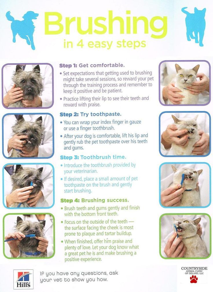 Veterinary Dentistry Pet clinic, Dog dentist, Pets