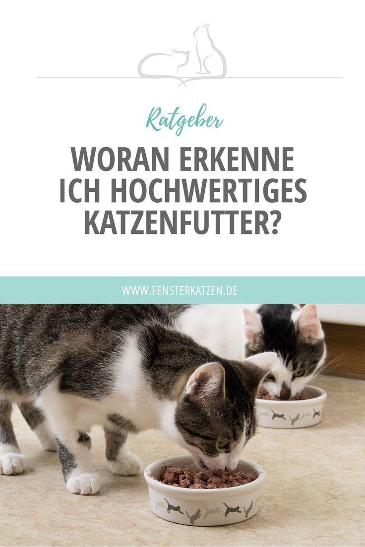 Woran Erkenne Ich Hochwertiges Futter Katzen Futter Katzen Und