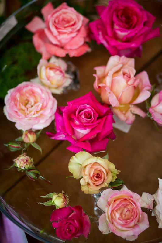 Every shape, colour and fragrance revealed at all our rose centers.