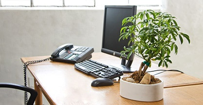 Office plants are both refreshing and relaxing.