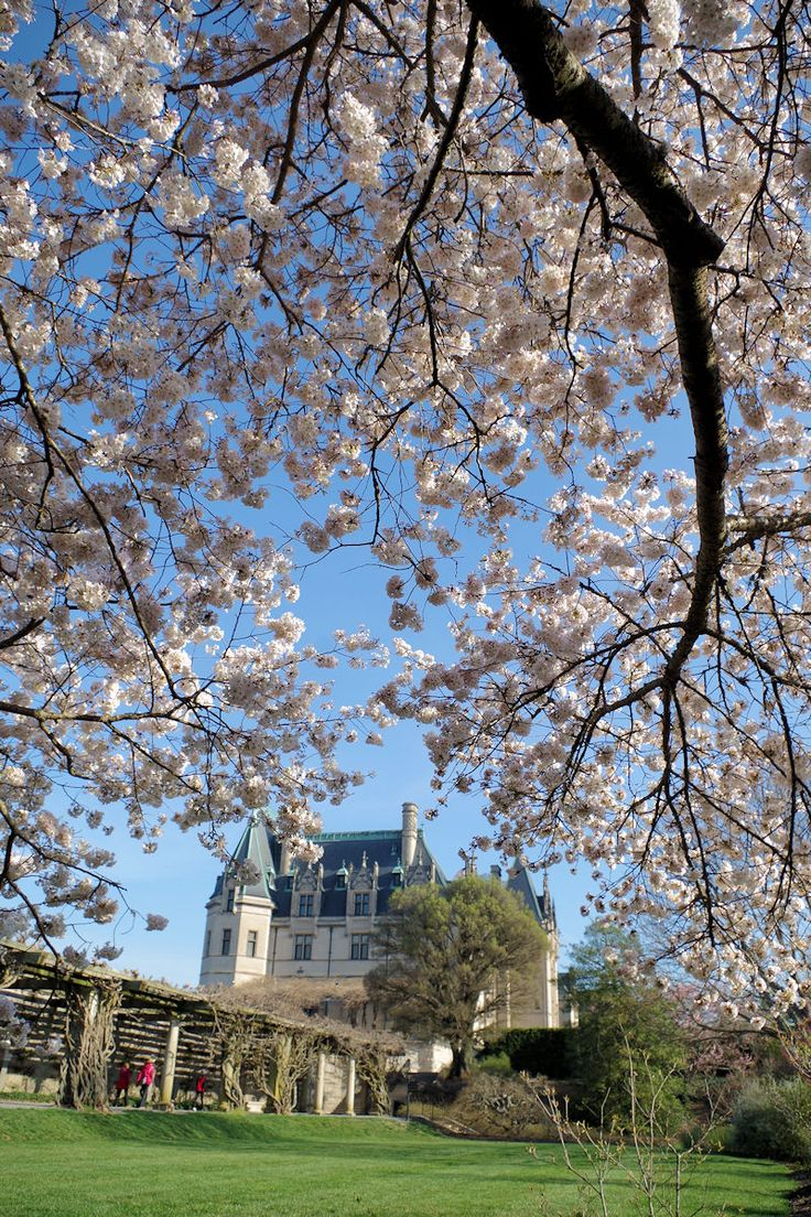 222 best biltmore house gardens images on pinterest biltmore see tulips and enjoy special events and ticket specials at the biltmore blooms festival of flowers held each spring in asheville north carolina dhlflorist Image collections