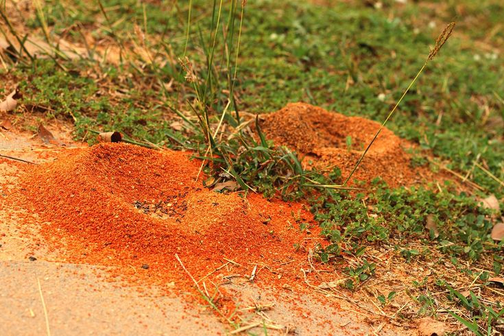 Natural Way To Get Rid Of Ants In Raised Beds