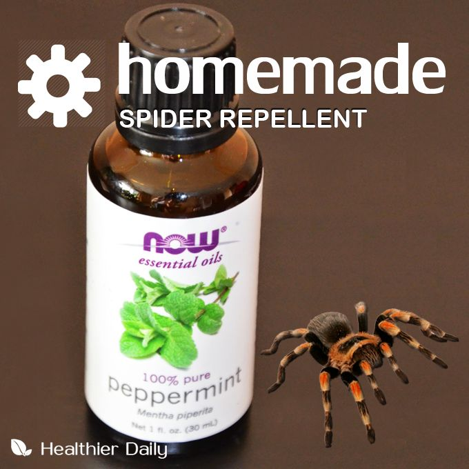 Natural ant killer for vegetable garden get rid of for How to get rid of spiders in the house uk