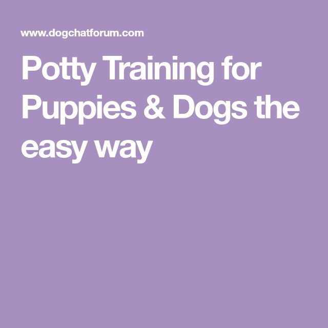 Potty Training for Puppies & Dogs the easy way #puppypottytrainingtips