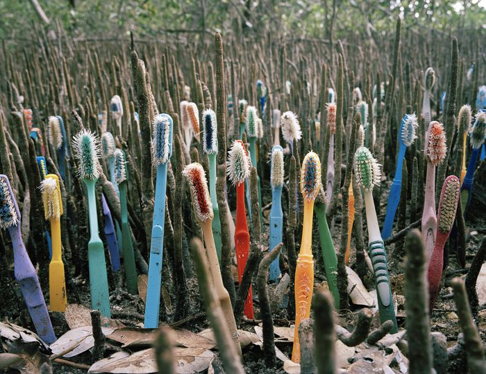 An artist uses a colorful assortment of toothbrushes stuck upright in the ground and arranged alongside the natural plant shoots they were meant to mimic.