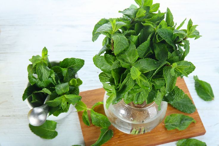 How to store fresh herbs to make them last. By Nancy Mock
