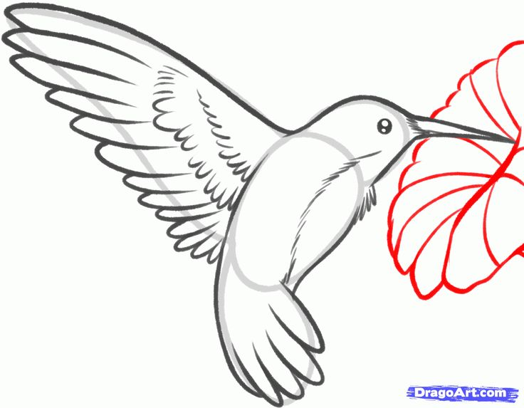 Simple Bird Line Art : How to draw a hummingbird and flower step by birds