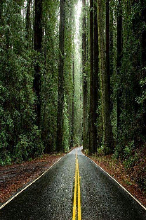 Northern Califoria