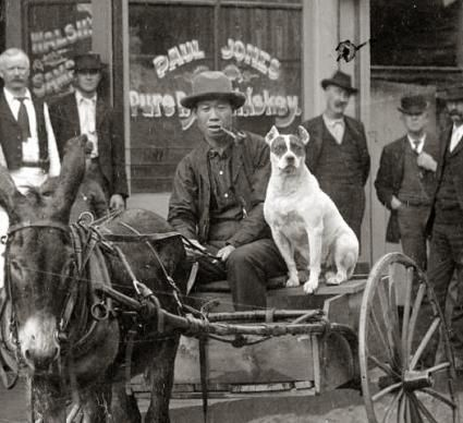 In front of a saloon in Georgetown, Colorado with a Chinese man who is identified as Chan Gow and his pit bull type dog. This photo is dated 1875-1892.     From the Western History/Genealogy Dept., Denver Public Library.