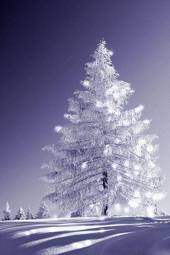 #arbre #blanc dans la #neige - Dream a little dream