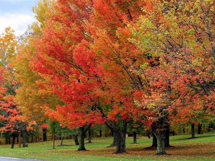 88 Best Fall Foliage Images On Pinterest