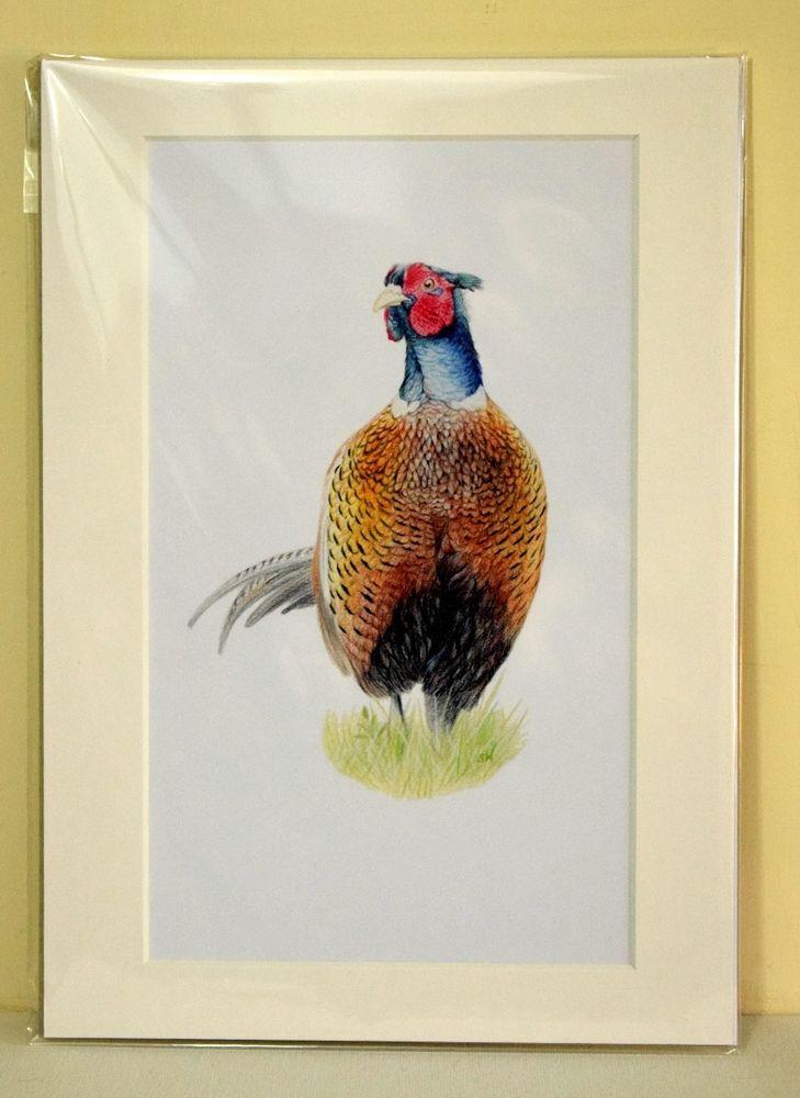 Pheasant - Sandra Warmerdam Mounted Art Print A4 #pheasant #wildlife #print
