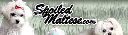 SPOILED MALTESE:  Many Topics and Answers to Questions Regarding Maltese Dogs