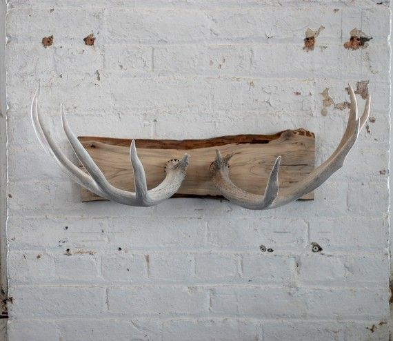 Naturally shed deer antler wall mount from evolvinghabitat on etsy - for Jamie's garage