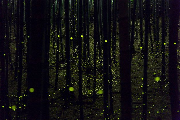 fireflies all over the woods
