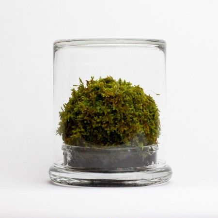 Mosser Moss Terrarium. One for the desk.