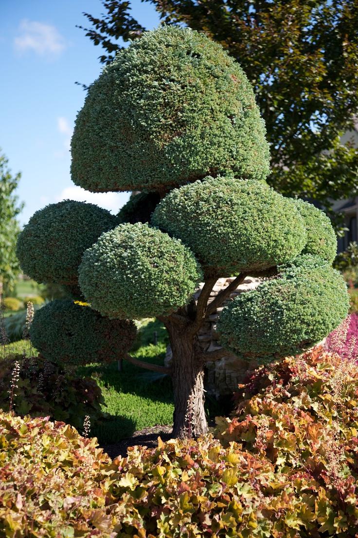 Pom Pom and Heuchera. I want to learn how to sculpt plants!