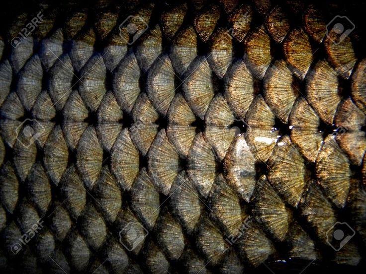 squame di pesce su un pesce d'oro