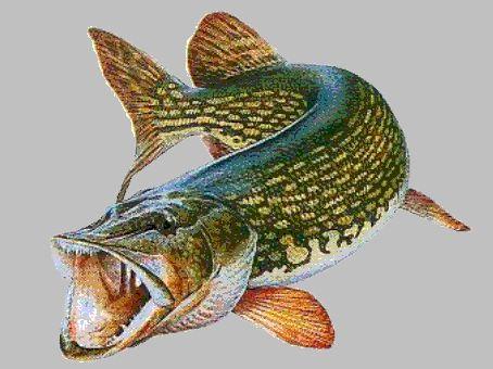 sur pêche mania vous trouverez tout sur la pêche en étang lac ou rivière ainsi que la pêche en mer Read more at http://peche-mania.e-monsite.com/#jPe16mw6qjVwHLhU.99