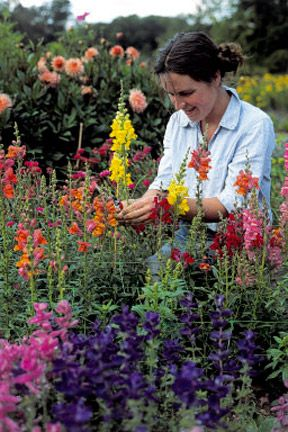 Cut flowers: growing and selection  Many garden plants can be enjoyed as cut flowers and foliage in the home, offering cheaper and diverse alternatives to florist flowers. Borders can be adapted to provide cutting material throughout the year. Alternatively, dedicate a part of the garden to growing cut flowers.