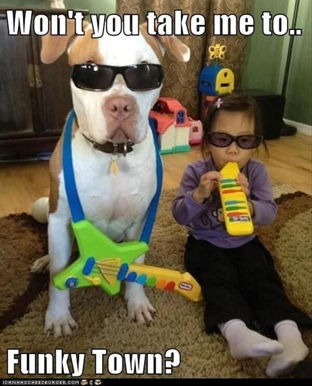 I hate it when people dress dogs up, but I must admit that even I've put sunglasses on my first dog. This photo reminds me of that time I did it. It also makes me want to sing like Lipps, Inc. does at the top of my lungs.