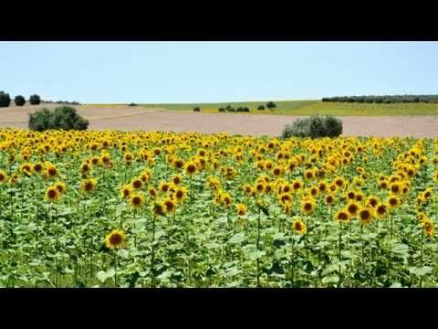Que belas paisagens do Baixo Alentejo! | 1001 TopVideos