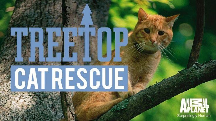 Program TV Amerika Ini Menyelamatkan Kucing Yang Terjebak Di Pohon! Di Indonesia Juga Harus Ada Nih Menyelamatkan Kucing Dari Lemparan Sendal Emak-Emak  Dagelan