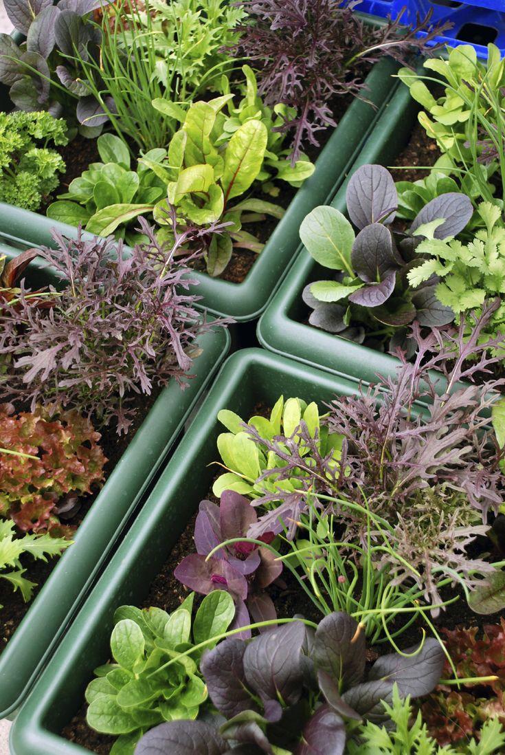 biologisch_tuinieren