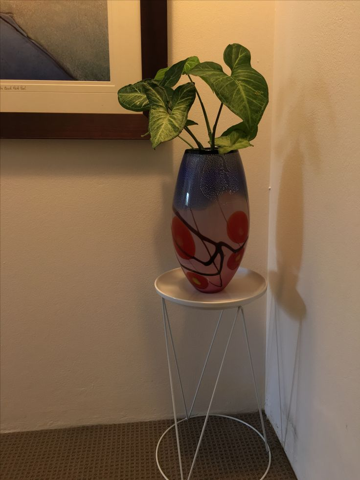 Arrowhead vibe - Syngonium growing in base with water at the moment!