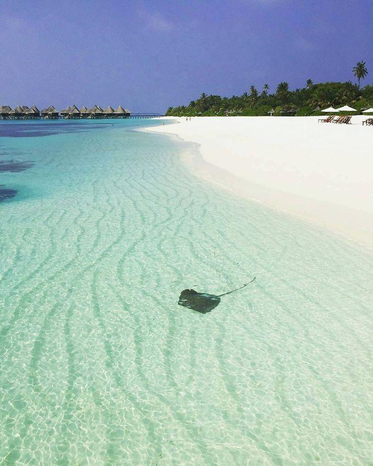 Coco Palm Dhuni Kolhu #Maldives  Photo /nasruali/ -  #cocopalmdhunikolhu #island #luxury #resort #honeymoon #beach #holiday #destination #sun #sand #sea #sky #picoftheday #photooftheday #instagram #instagood #instadaily #wanderlust #loveyourself #bucketlist #fun #awesome #stunning #cute #marinelife #travel #tourism #stingray