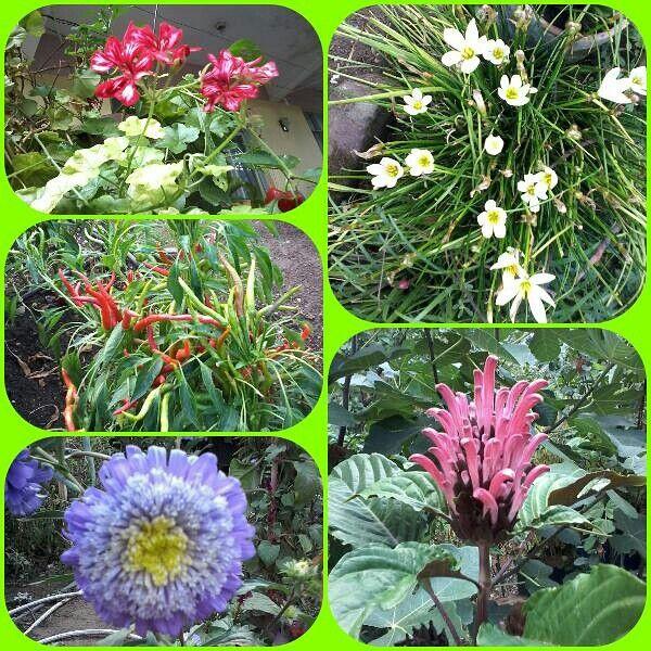 Köyümden çiçekler