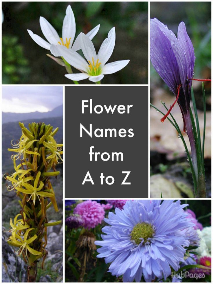A to Z of Flowers - Flower Pictures