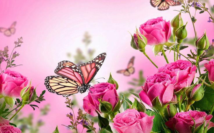 valentine background hd