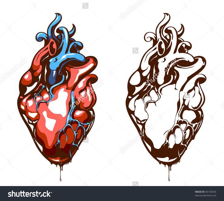 Anatomical Heart Drawing Vector - human heart vector free download ...