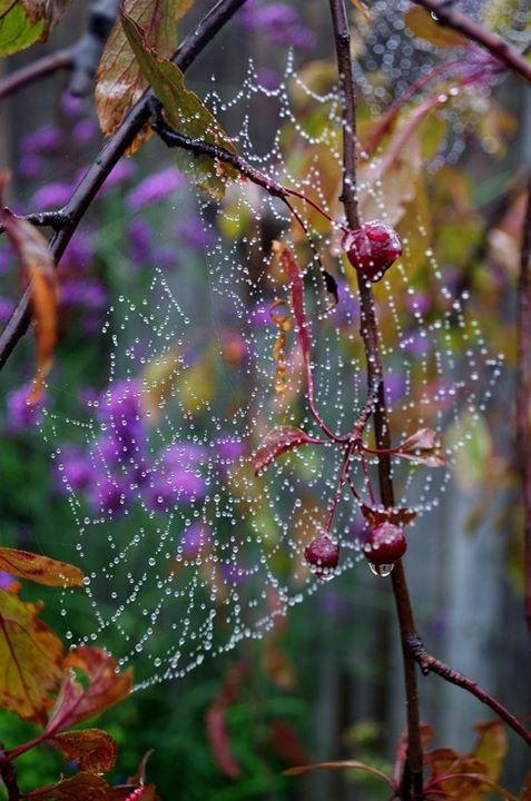 purple studded web..a beautiful way to get caught in those gossamer strings..or is it?