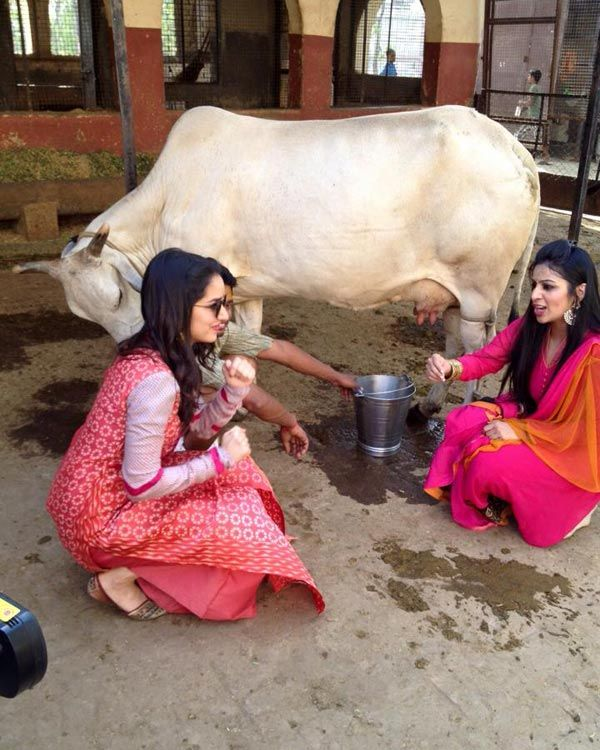 Expecting Shraddha Kapoor to milk the cow will be a little too much but the girl did witness it, it seems from this picture.