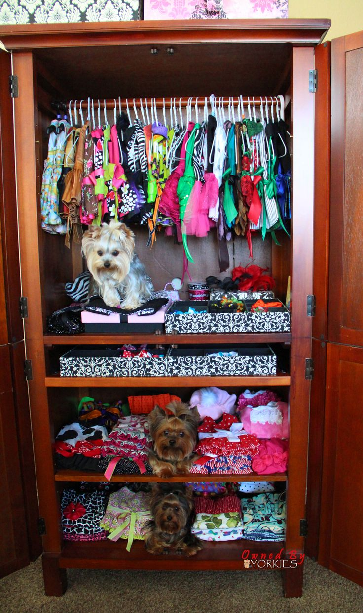 Perfect Closet Space For My Bella Bug. We Just Need To Add A Compartment  For Her Hair Bows. :)u003cu003c My Future Dog Will Be Spoiled AF Like This