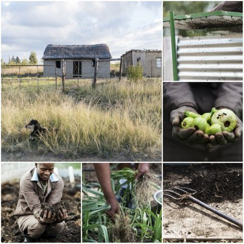 Find out how we're helping build a #sustainable future for the #Drakensberg community through #permaculture...