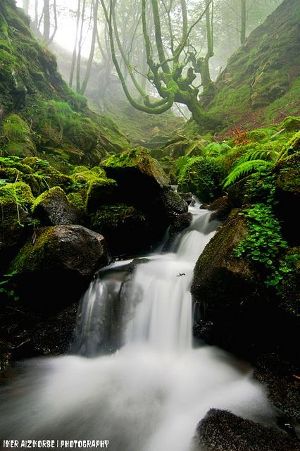 Baso barrenean / Dentro del bosque, Gorbea Pais Vasco Spain