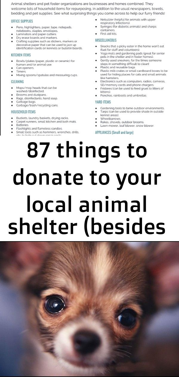 Looking for ideas for animal shelter donations? This list