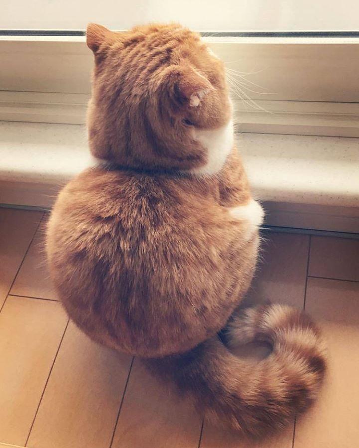 lump of kitten