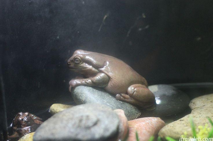 Frog at Busan Aquarium - www.itraveleh.com