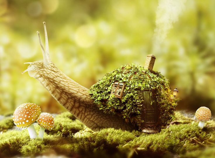 How to Create a Fantasy Snail Photo Manipulation With Adobe  Photoshop  Design Psdtuts