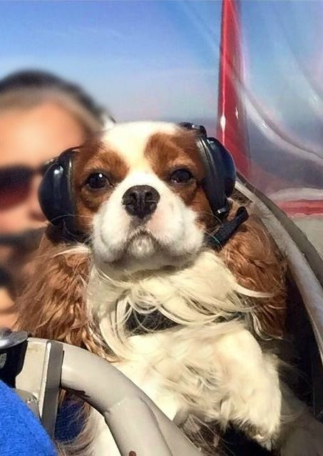 """""""Cavalier One to tower, requesting clearance to land on runway one,"""" lol."""