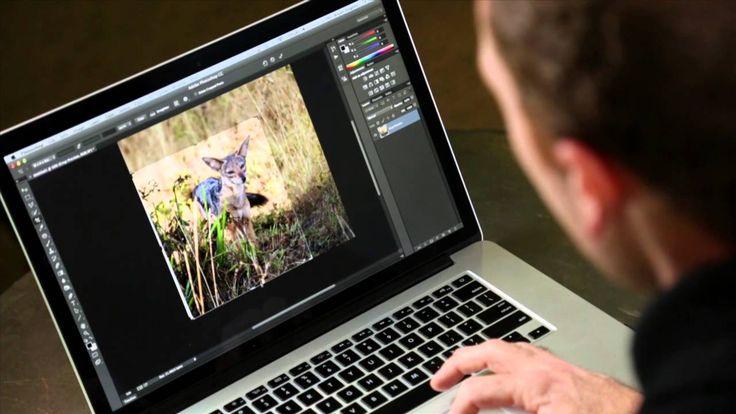 Photoshop Playbook:  GIF-анимация How to Create Animated GIFs